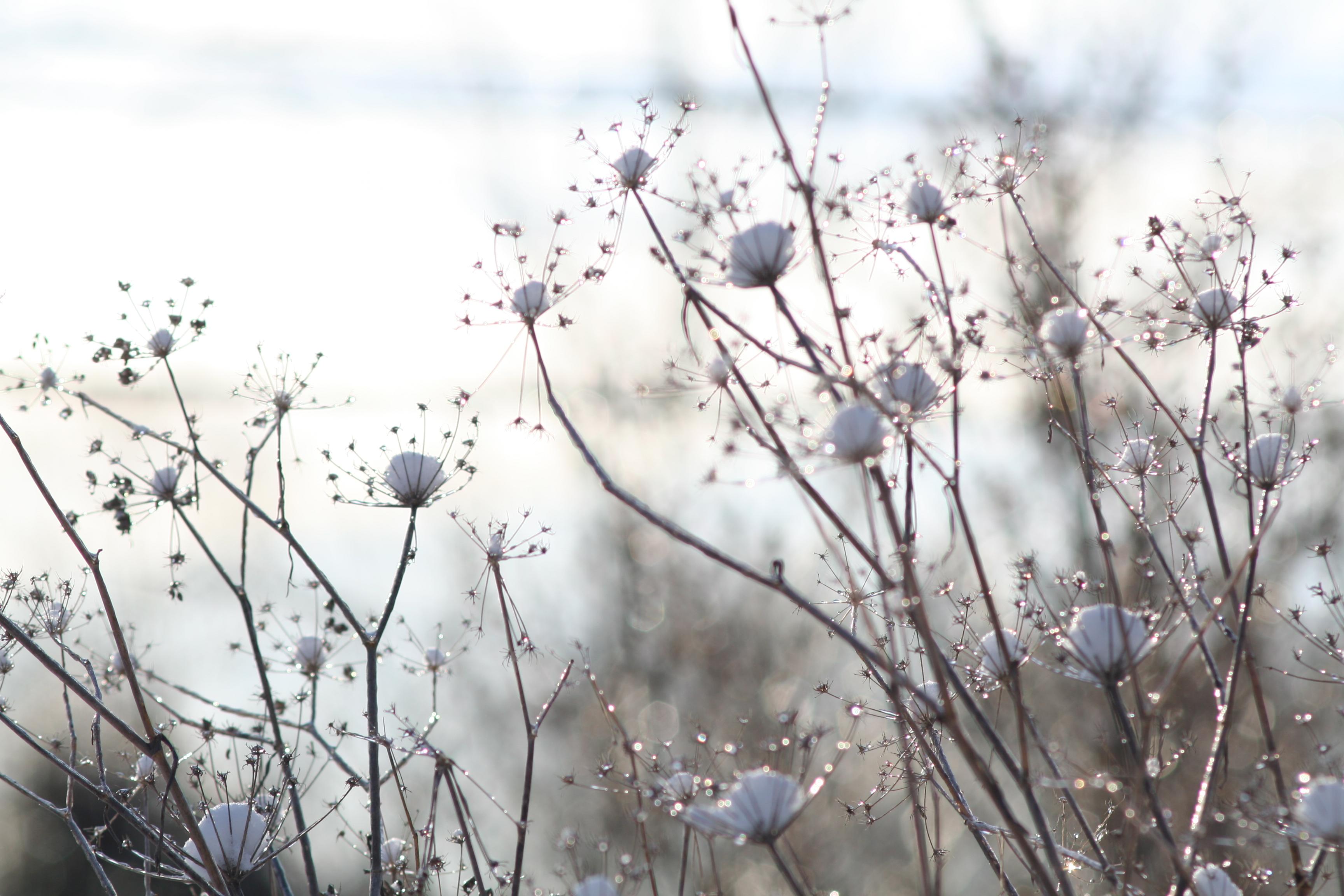 Trish Lapointe Design, Mystic CT, nature photograph